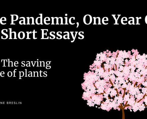 Pandemic essays: The saving grace of plants